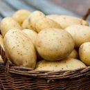 Диетологи назвали веские причины для употребления картофеля