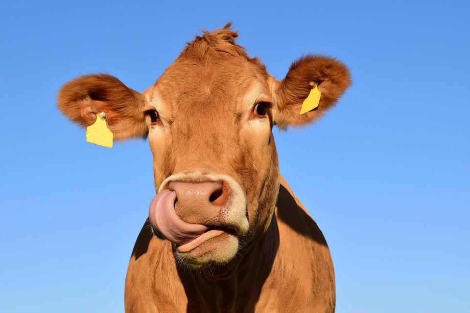 В Липецкой области выросло производство молока и мяса