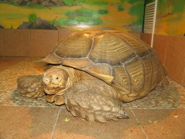 Придумай имя для черепахи и получи пригласительный в тульский экзотариум