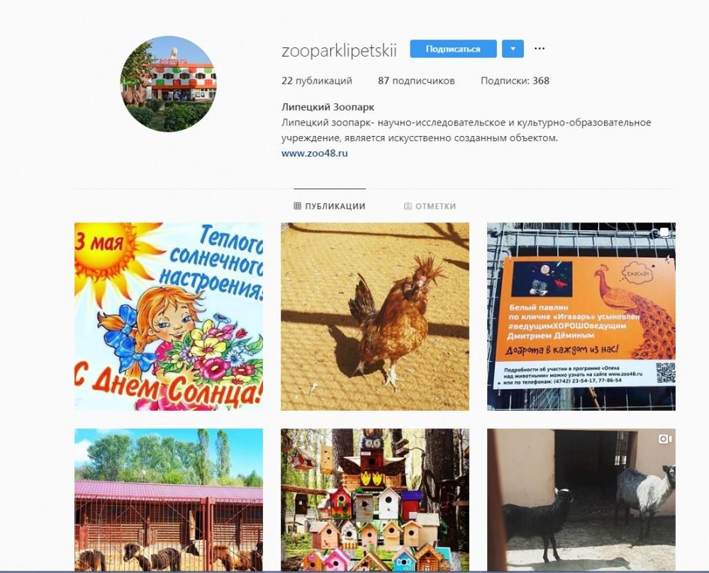 У липецкого зоопарка появилась страничка в Instagram