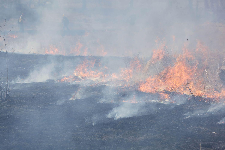 Пожары в Удмуртии, дело Кокорина и Мамаева, первенец принца Гарри и Меган Маркл: что произошло минувшей ночью